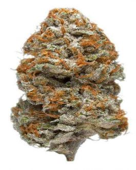 Purple Bud For Sale