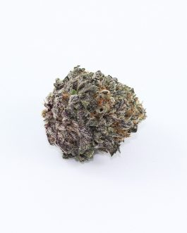 Buy Purple Crack Strain