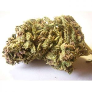 Cracker Jack Strain for sale