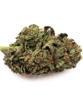 Master Kush Strain For Sale
